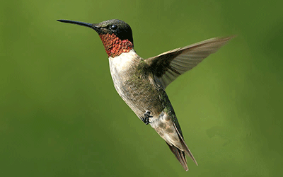 Hummingbird and Senior Housing Marketing